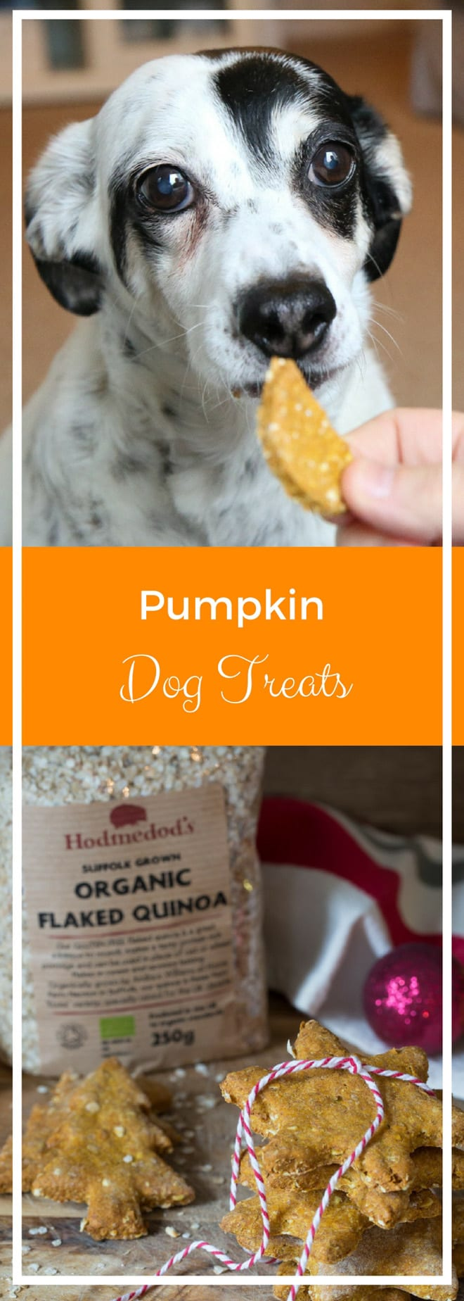 Pumpkin Dog Treats - natural ingredients that your pup will LOVE! thecookandhim.com