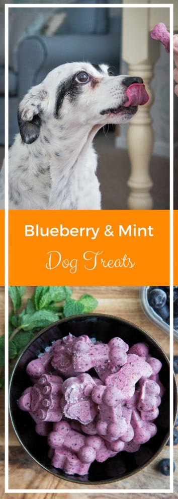 Blueberry Mint and Yoghurt Dog Treats - Just 4 ingredients for these super easy, all natural treats for your pup! Frosty fresh mint, yoghurt, blueberries and banana that your pup will LOVE | thecookandhim.com